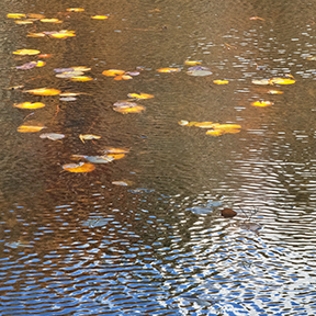 Autumn Reflection with Ripples
